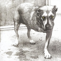 Alice in chains ('95) - ALICE IN CHAINS